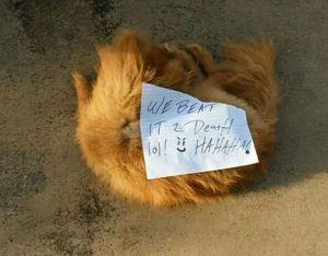 Il retrouve son chien mort, avec une note de ses tortionnaires   Blog   Houpet's