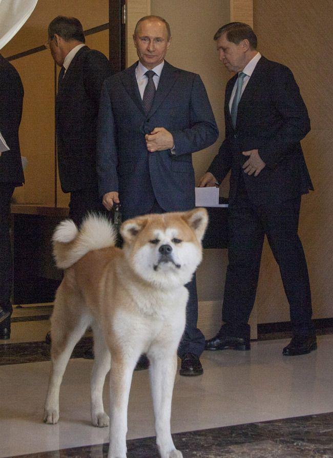 Vladimir Putin and his beautiful Akita