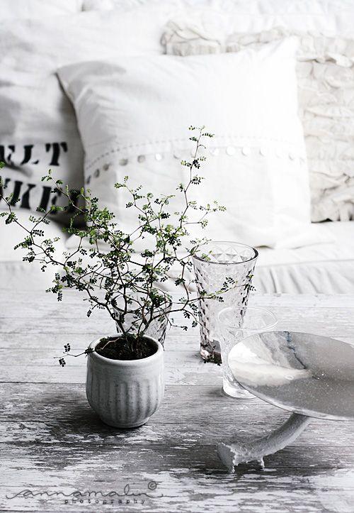 104 besten zimmerpflanzen bilder auf pinterest zimmerpflanzen blumen pflanzen und sukkulenten - Zimmerpflanzen groay ...