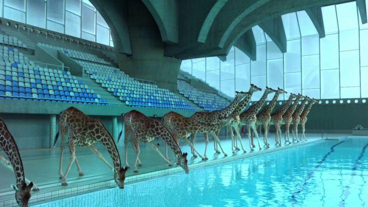 http://www.eminor.tv/a-weird-short-film-about-a-herd-of-giraffes-jumping-off-a-high-dive/