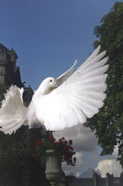 """Paris Dove"" 201 by Ryszard Horowitz  Signed, Archival pigment Size: 10 x 20 Available Qty: 1  for pricing see: http://jhproject.org/galleries/professional-photographers-gallery/"