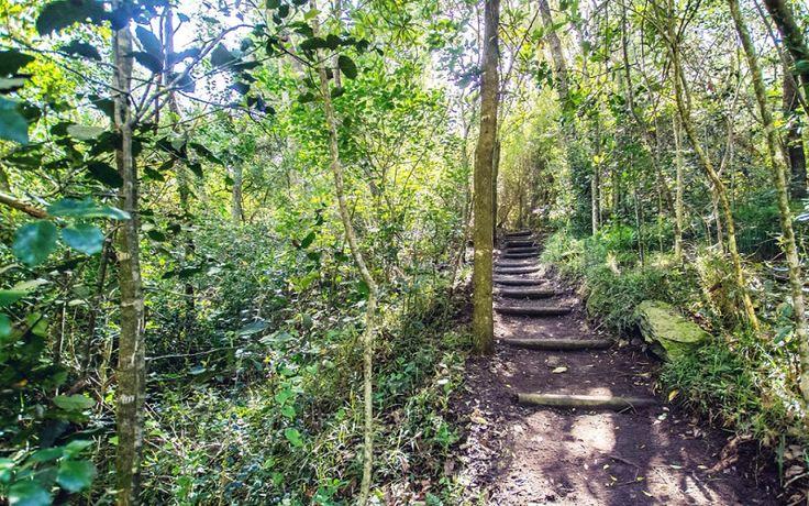 Misty Mountain Reserve, Tsitsikamma Garden Route