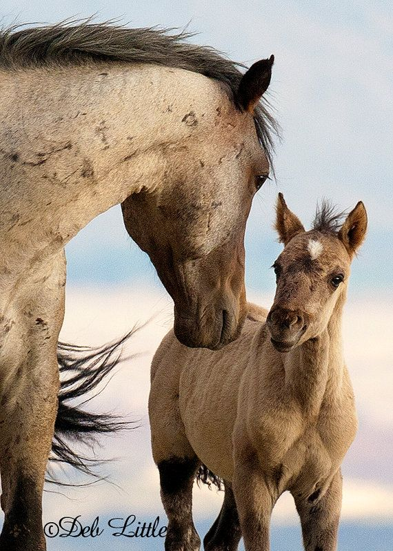 Stallion and Foal  Wild Mustangs  5x7 Original Fine by deblittle