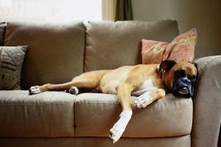 How to Clean Couch Cushions That Stink (with Pictures) | eHow
