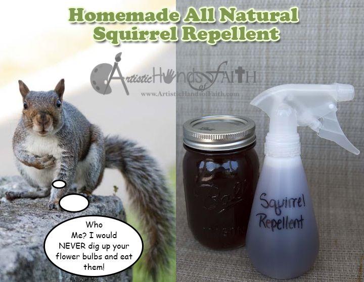 25 Best Ideas About Squirrel Repellant On Pinterest Squirrel Proof Bird Feeders Squirrel