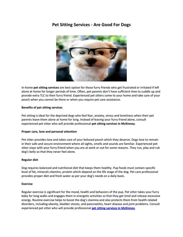 Pet Sitting Services - Are Good for Dogs