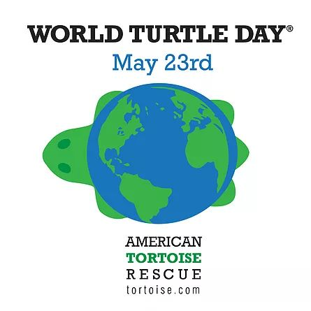 world turtle day World turtle day is observed next on wednesday, may 23rd, 2018 it has been observed annually on may 23rd since 2000.