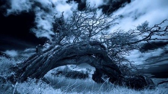 Hawaiian-infrared-time-lapse-of-haunting-Mamane-trees-made-with-IR-converted-Nikon-D5200-2