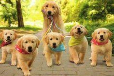 ¿Cuántos años vive un perro? #curiosidades #curiosfera @curiosfera