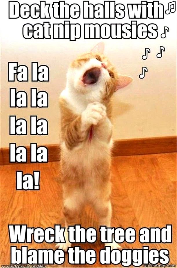 Top Laughing So Hard Cat Memes Cat Memes Very Funny Funny Dog Captions Funny Animals With Captions Funny Christmas Pictures