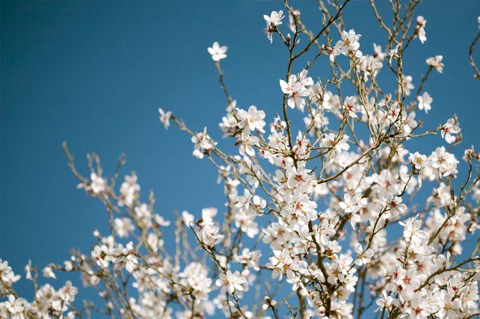 #TRASTORNOBIPOLAR Parece que por fin nos hemos librado del invierno. La primavera ya está aquí y viene cargada de más horas de luz y energía, pero ¿sabías que esta estación también provoca cambios en las personas con trastorno bipolar?