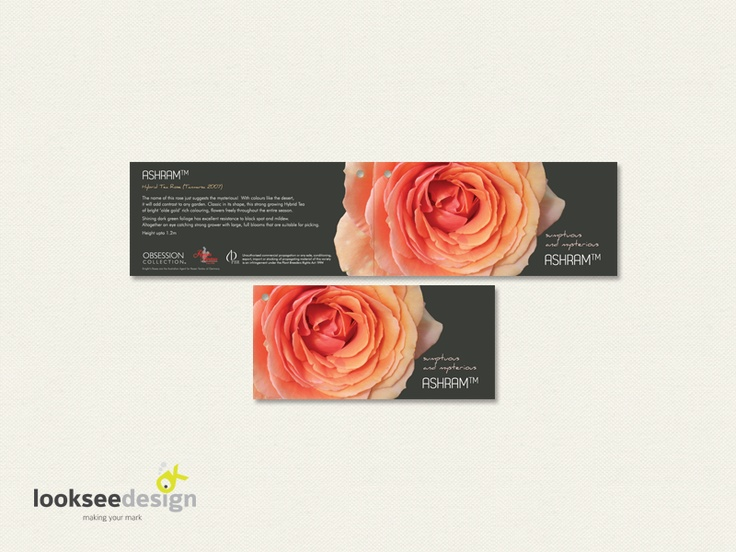 Knight's Roses Ashram Rose Label - Designed by Looksee Design