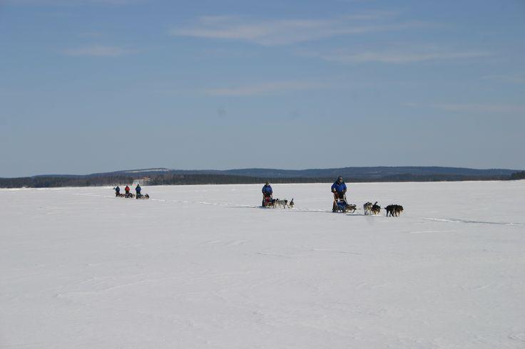 Huskysafari with Finn-Jann Huskyfarmi, Taivalkoski, Lapland, Finland www.finn-jann.com