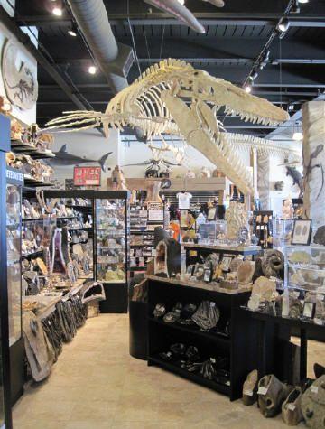 The Dinosaur Store   Cocoa Beach  Florida