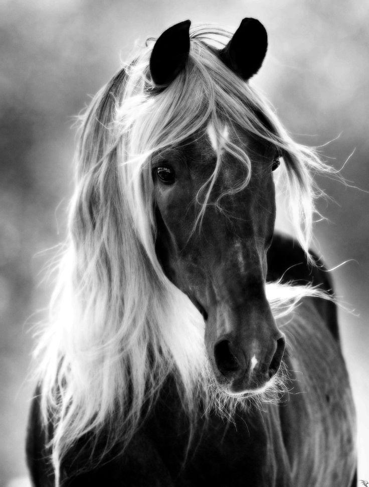.beautiful horse