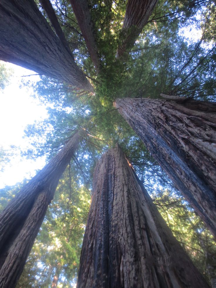 The Avenue of the Giants, California, USA