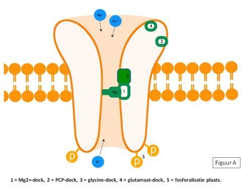 S Ketamine werking op NMDA receptor