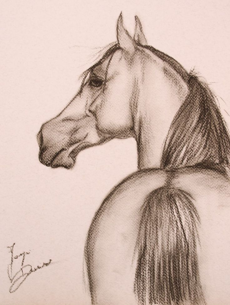Image result for horse drawings