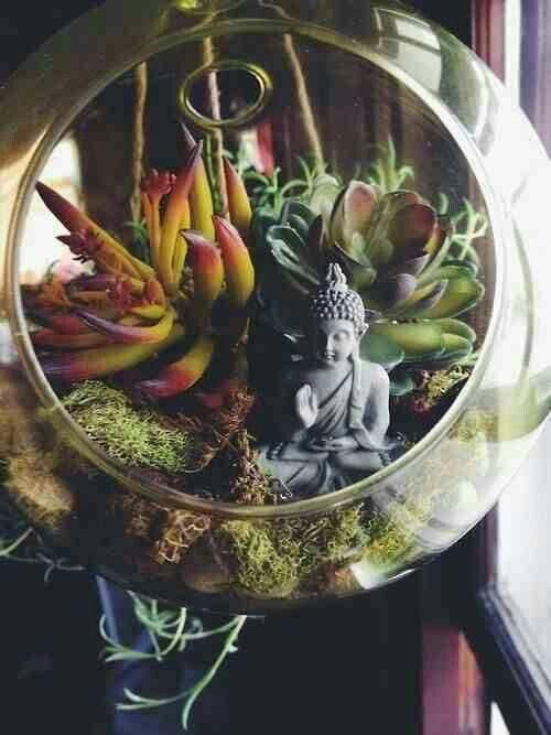 Succulent buddha