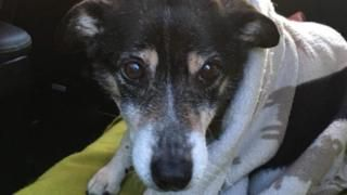 Doggie Found Alive after 10 days in the Snow