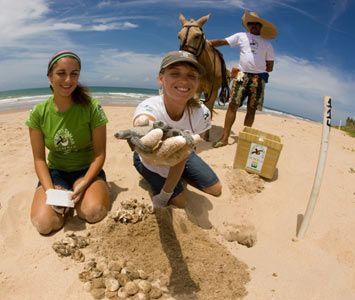 O Projeto Tamar foi criado em 1980 pelo antigo Instituto Brasileiro de Desenvolvimento Florestal-IBDF, que mais tarde se tornou Ibama-Instituto Brasileiro de Meio Ambiente. Hoje, é reconhecido como uma das mais bem sucedidas experiências de conservação marinha do mundo e serve de modelo para outros países, sobretudo porque envolve as comunidades costeiras diretamente no seu trabalho socioambiental.