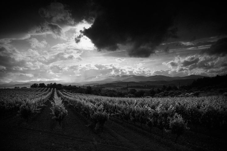 Clouds & sun over vineyard Don McCullin Feature