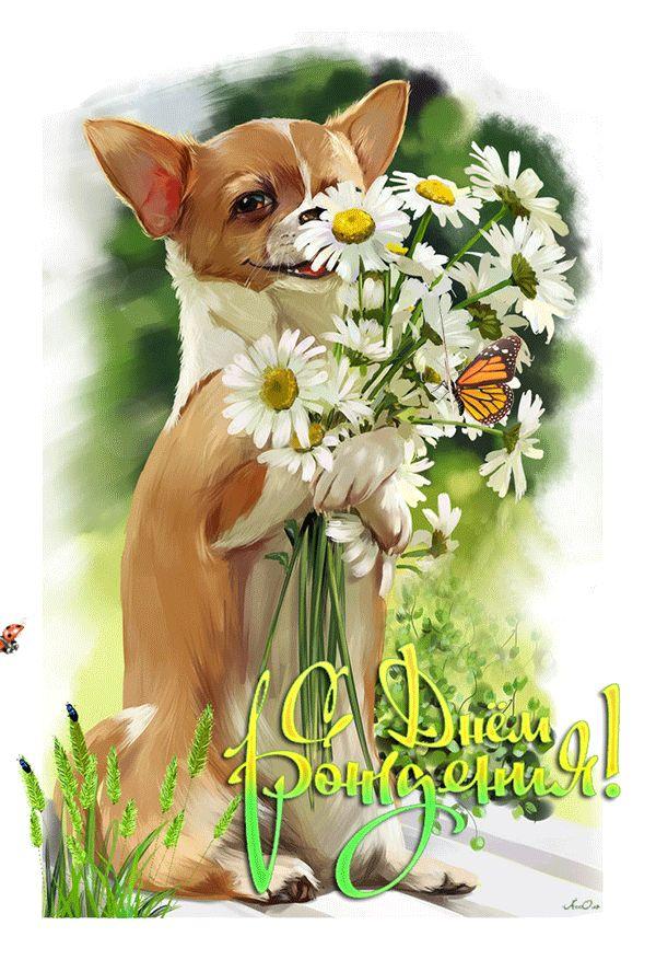 Открытки собаками день рождения, рисунки тренер
