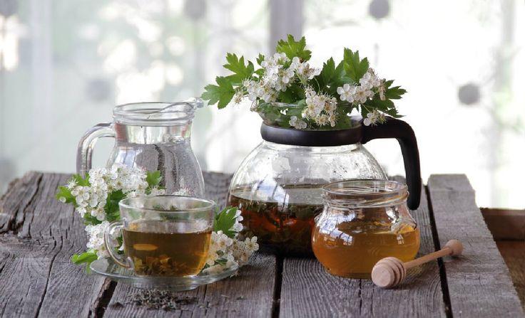 HLOH - sběr a užití + 6 osvědčených receptů