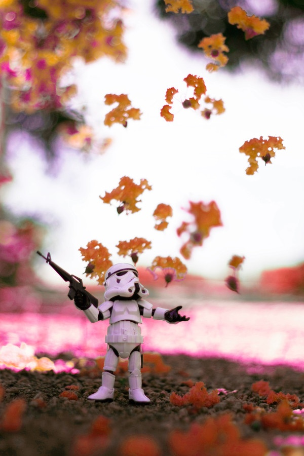 it's summer  #toys photography #starwars #stormtrooper