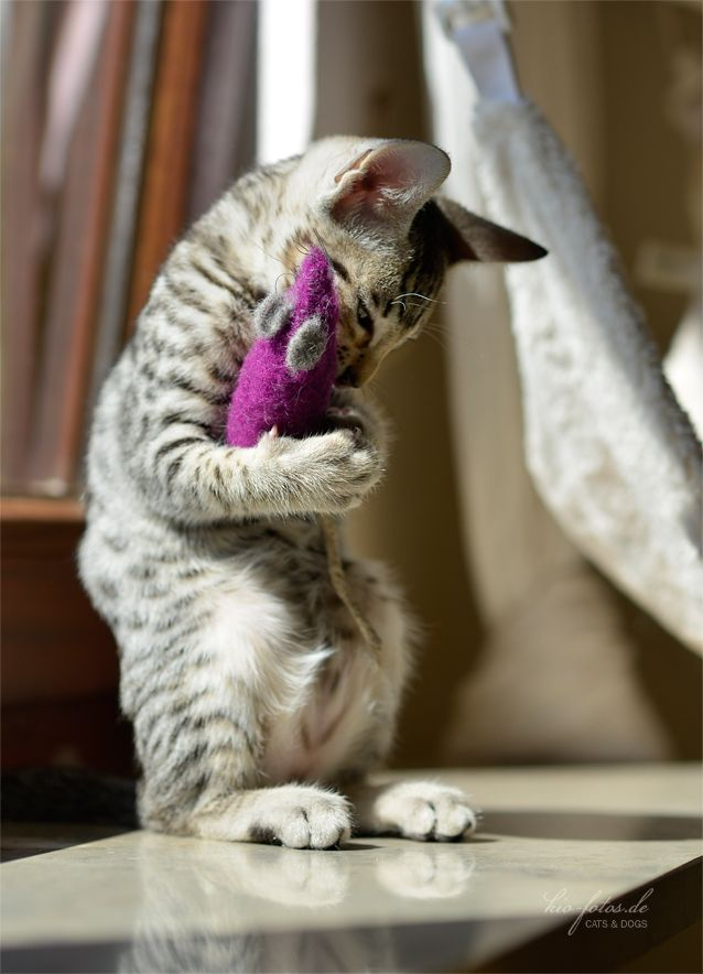 I love you, purple mousie <3 :-)