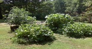 Straw Bale Gardening: Straws Bale Gardens, Fish Meals, Straws Gardens, Straw Bale Gardening, Bones Meals, Straws Bail, Extensions, Bale Gardening Great, Bail Gardens