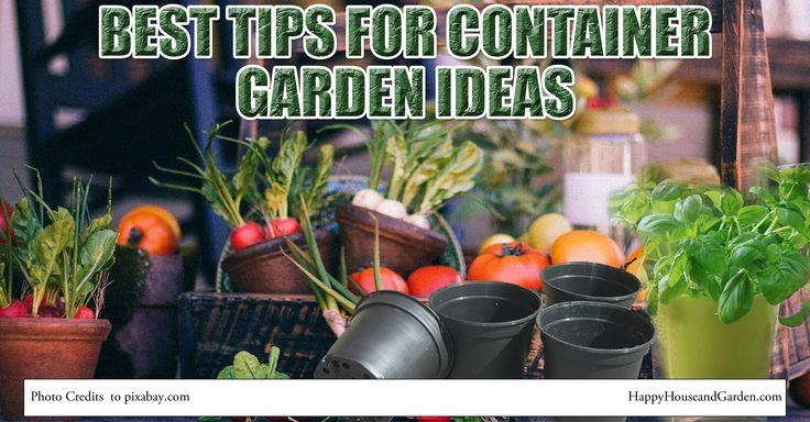 Best Tips For Container Garden Ideas2