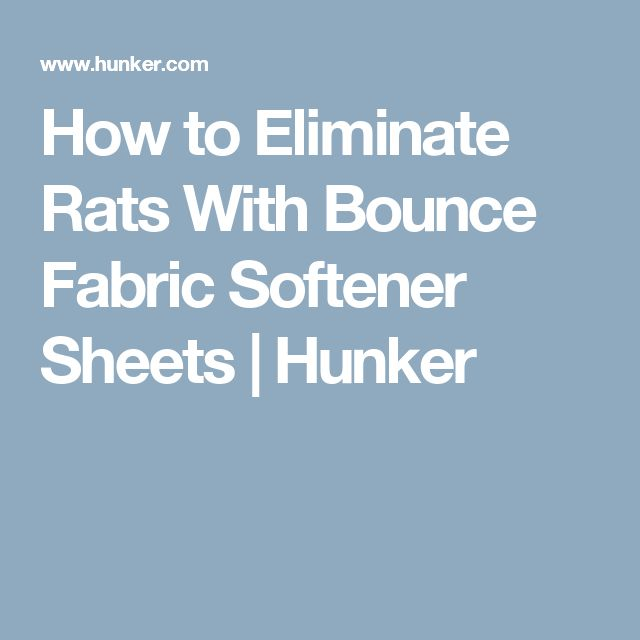 How to Eliminate Rats With Bounce Fabric Softener Sheets | Hunker