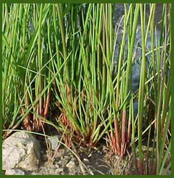 37 best images about bassin de jardin et plantes - Profondeur d un bassin de jardin ...