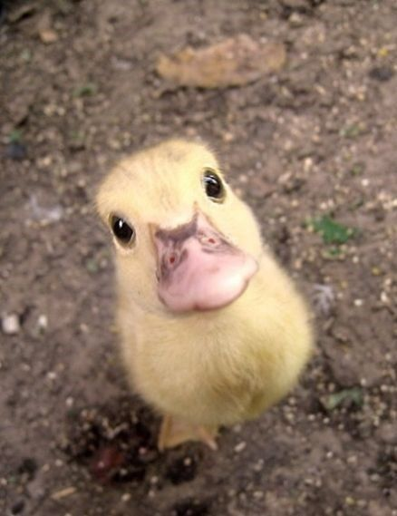 Finally, my favorite ducky extracted from that really huge pin with all the cute animals.