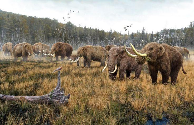 A herd of American Mastodon by Roman Yevseyev