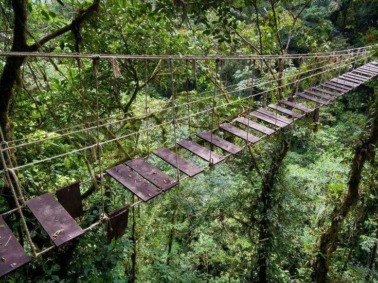 A bridge passing through the Amazon Rainforest