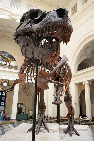 The skeleton of Sue, on display at Chicago's Field Museum.  I got to see her in St. Louis once.  Incredible!