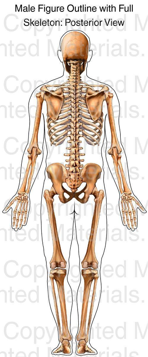 109 besten Anatomy Bilder auf Pinterest | Knochen, Medizin und Anatomie