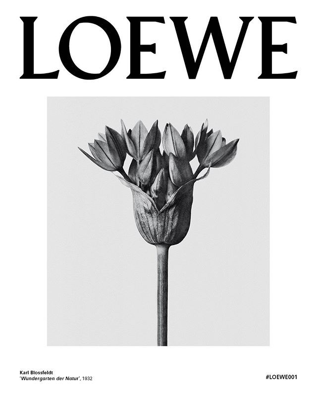 PRE-LAUNCH The first fragrance under the creative direction of @Jonathan.Anderson Distinctive packaging features the photographic artwork of Karl Blossfeldt. Available in LOEWE stores, loewe.com, @barneysny and @harrods #LOEWE001 #KarlBlossfeldt