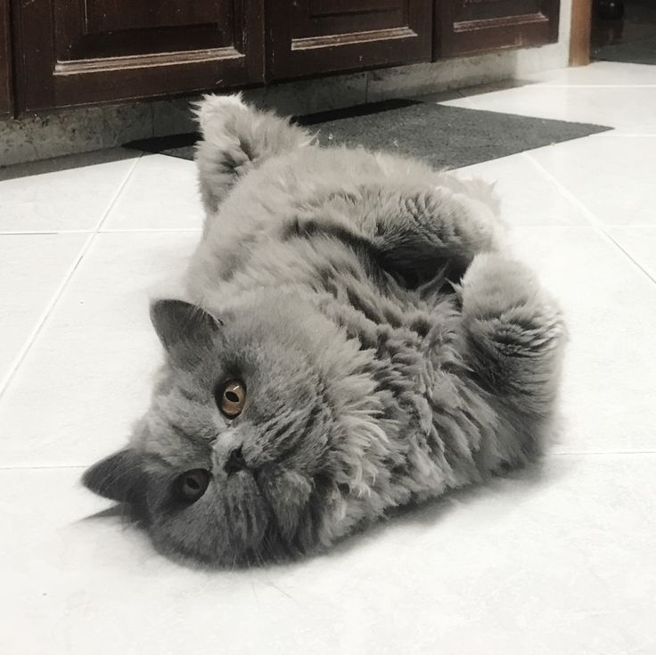 Jugando un rato. #gata #gatita #gatica #lavidadelucre #cat #kitty #animal #pet #mascota #minina