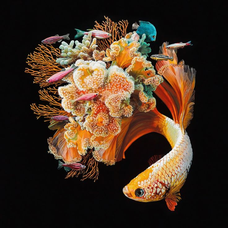 Pinturas de peixes exuberantes hibridados com recifes de coral de Lisa Ericson