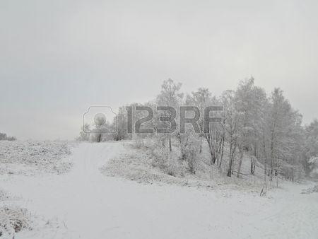 Зимний пейзаж на холме в лесу