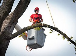 Tree care service can be complex as well as effort and time intensive. So, a lot of people leave it to professional tree services provides like Dreamworks trees who provide a range of #complete #tree #services to preserve the health of your tree and enhance its appeal.