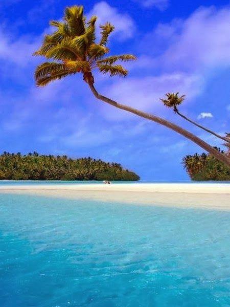 Exotic Beaches -Palm Tree on White Exotic Beach