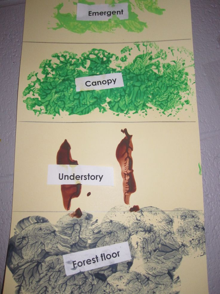 Rainforest levels: Using potatoes for the forest floor, celery for the understory, cauliflower for the canopy, and broccoli for the emerge, students will create the four layers of the rainforest while talking about printmaking.