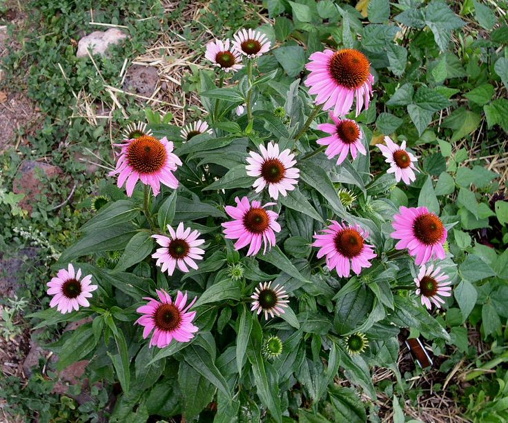 17 Best Images About Colorado Native Plants On Pinterest Plants Sun And Ornamental Grasses