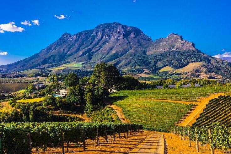 Au cœur de paysages grandioses, dans la région du Cap, la route des vins est un petit paradis de la dégustation. La preuve par quatre étapes atypiques.