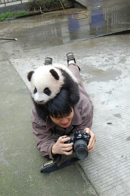 Attack of the cute panda!