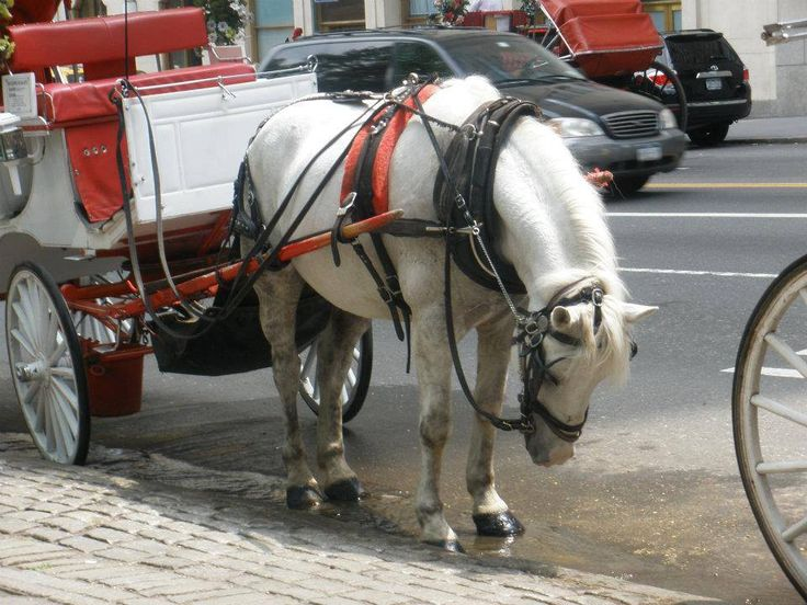 """if you want to DO SOMETHING to help these poor abused and enslaved horses, PLEASE JOIN US this coming SUNDAY!!! July 21st at 2pm in New York City -- help us abolish this BARBARIC and OBSOLETE and DEADLY """"tourist industry"""" once and for all!!! for the horses, i THANK YOU!!! https://www.facebook.com/events/143058772566465/"""